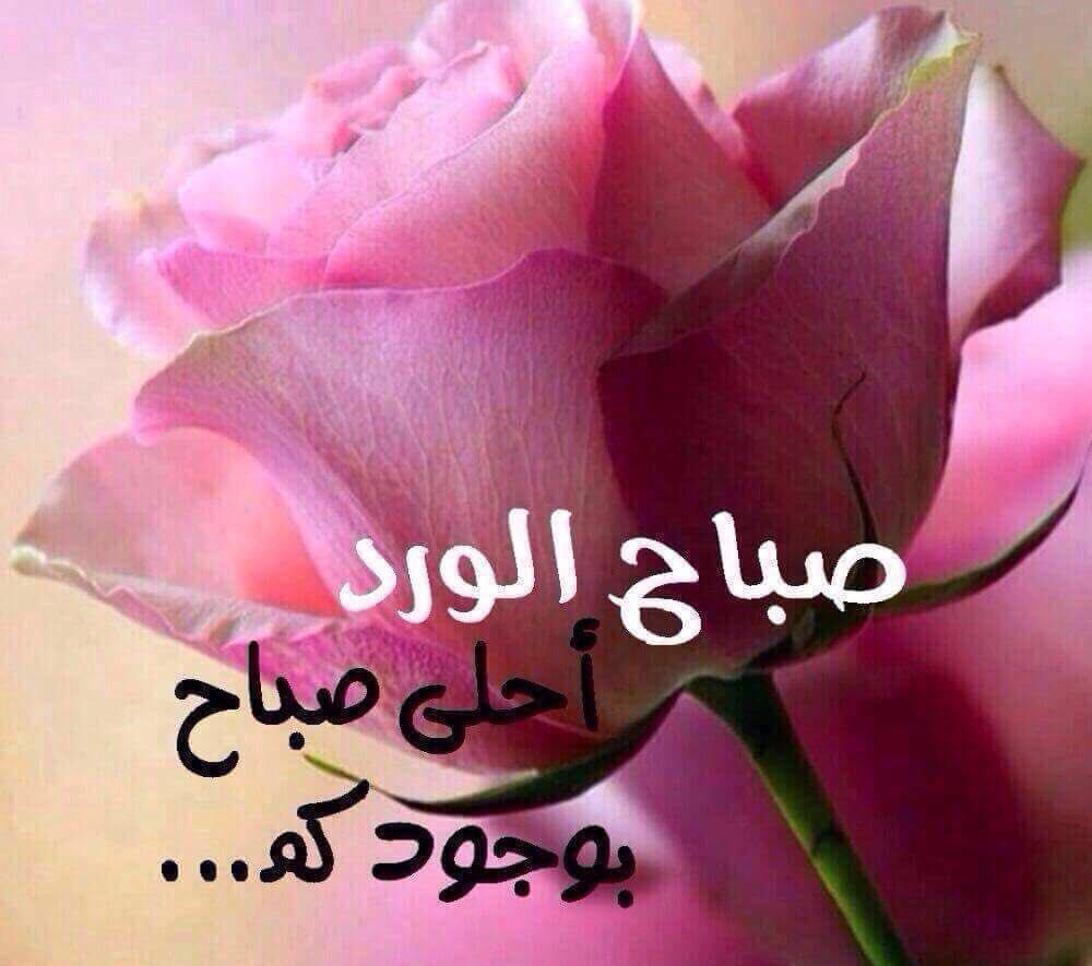 بالصور صباح الخير حبيبتي , اجمل صور لعبارات في الصباح مثل صباح الخير حبيبتي 1347 8