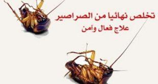 صوره القضاء على الصراصير , كيف نتخلص من الصراصير المزعجة.