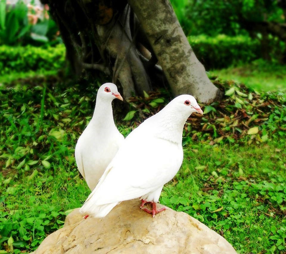 صور صور طيور , صور طيور مختلفة و رائعة