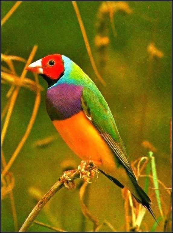 بالصور صور طيور , صور طيور مختلفة و رائعة 1472 10