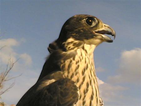 بالصور صور طيور , صور طيور مختلفة و رائعة 1472 12
