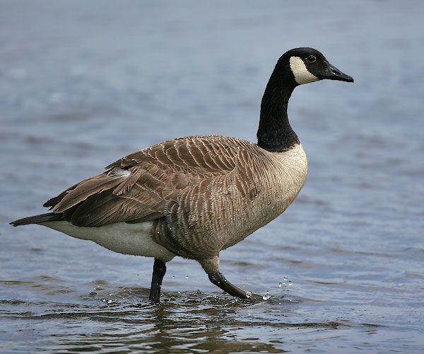 بالصور صور طيور , صور طيور مختلفة و رائعة 1472 13