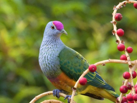 بالصور صور طيور , صور طيور مختلفة و رائعة 1472 2