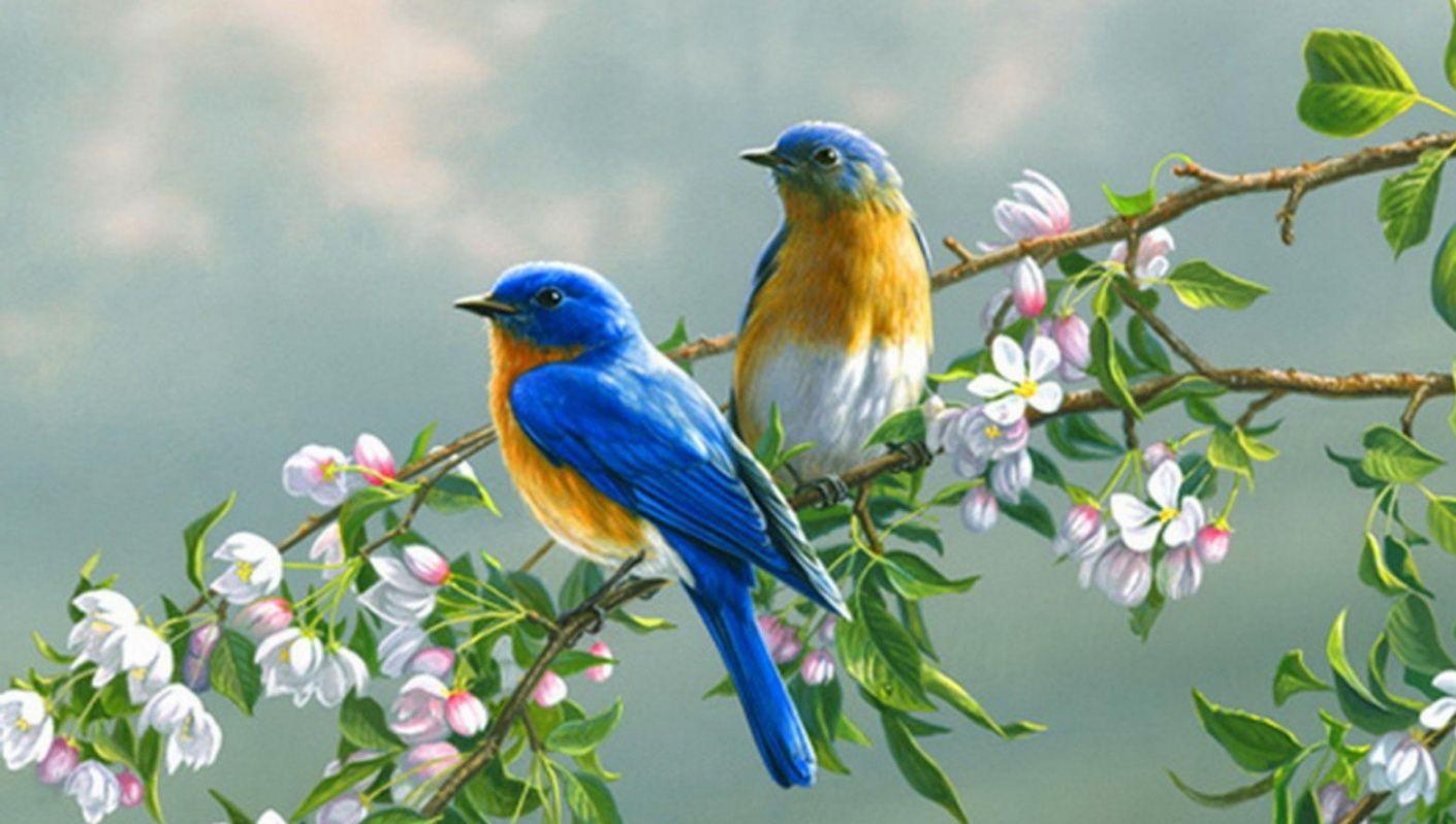 بالصور صور طيور , صور طيور مختلفة و رائعة 1472 3