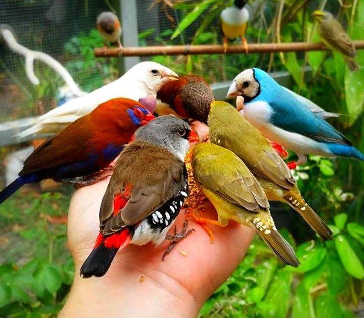 بالصور صور طيور , صور طيور مختلفة و رائعة 1472 4