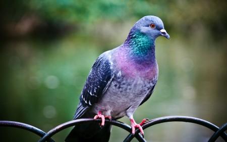 بالصور صور طيور , صور طيور مختلفة و رائعة 1472 5