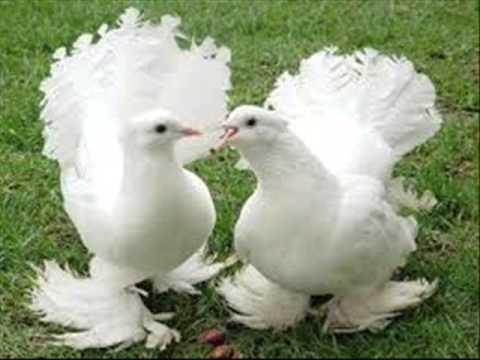 بالصور صور طيور , صور طيور مختلفة و رائعة 1472 6