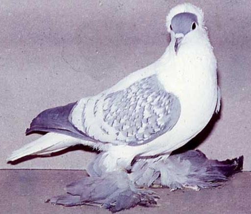 بالصور صور طيور , صور طيور مختلفة و رائعة 1472 7