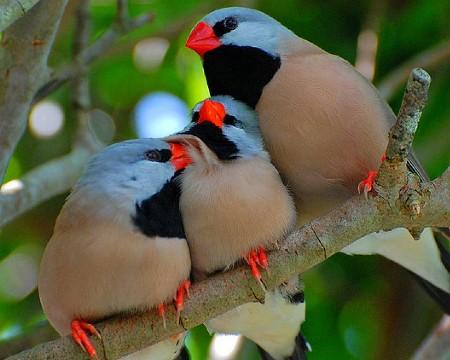 بالصور صور طيور , صور طيور مختلفة و رائعة 1472 8
