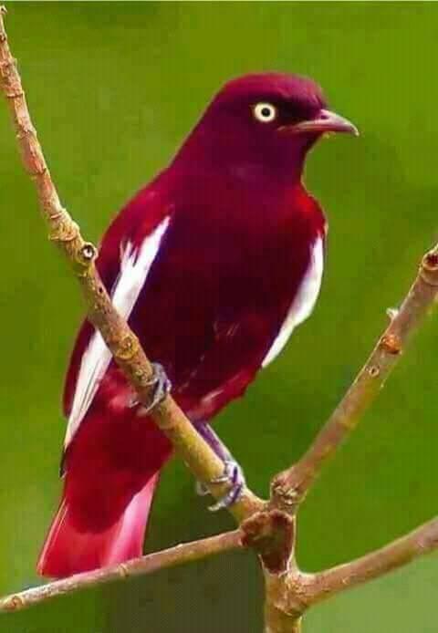 بالصور صور طيور , صور طيور مختلفة و رائعة 1472 9