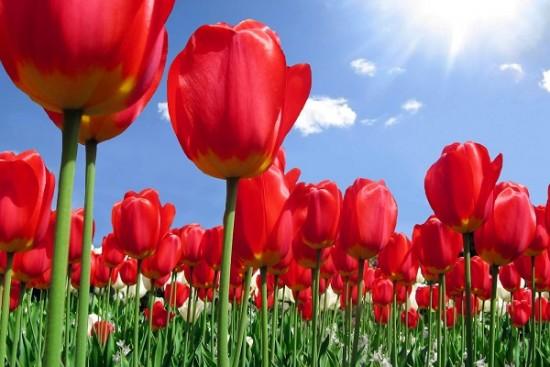 صورة صور ازهار , ازهار جميلة و راءعة