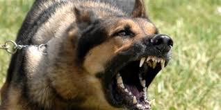 صورة انواع الكلاب , معلومات عن الكلاب