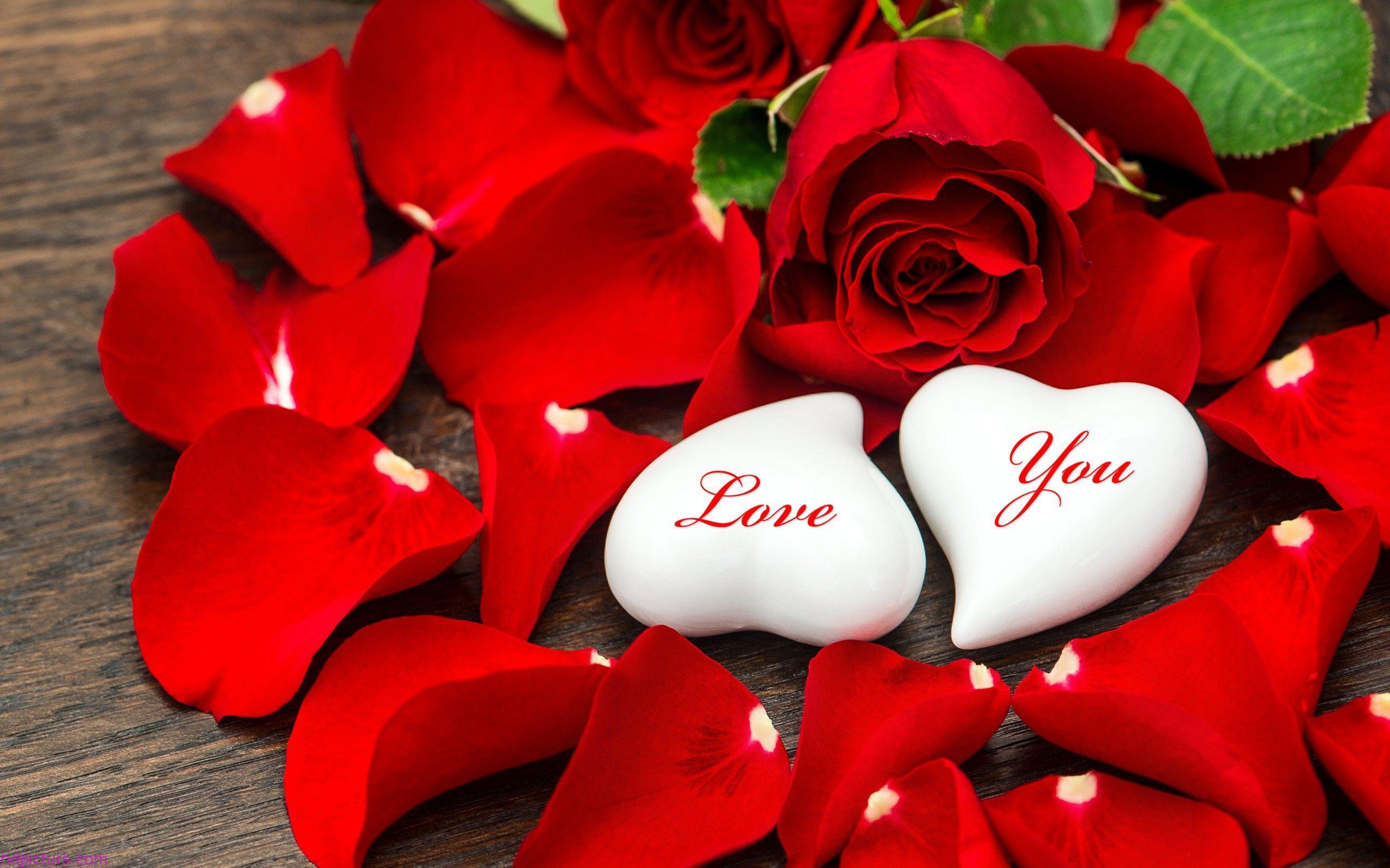 بالصور زهور الحب , ما هي زهور الحب 184 4