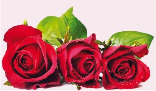 بالصور زهور الحب , ما هي زهور الحب 184 6