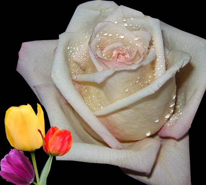 بالصور زهور الحب , ما هي زهور الحب 184 8