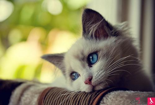 بالصور صور قطط كيوت , اجمل صور قطط 331 1
