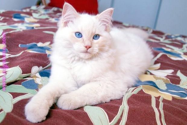 بالصور صور قطط كيوت , اجمل صور قطط 331 10