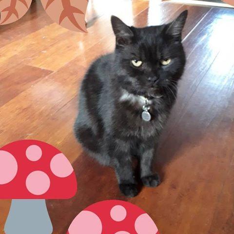 بالصور صور قطط كيوت , اجمل صور قطط 331 11