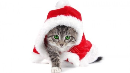 بالصور صور قطط كيوت , اجمل صور قطط 331 12
