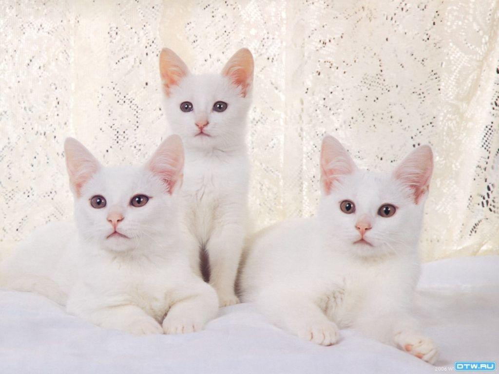 بالصور صور قطط كيوت , اجمل صور قطط 331 14