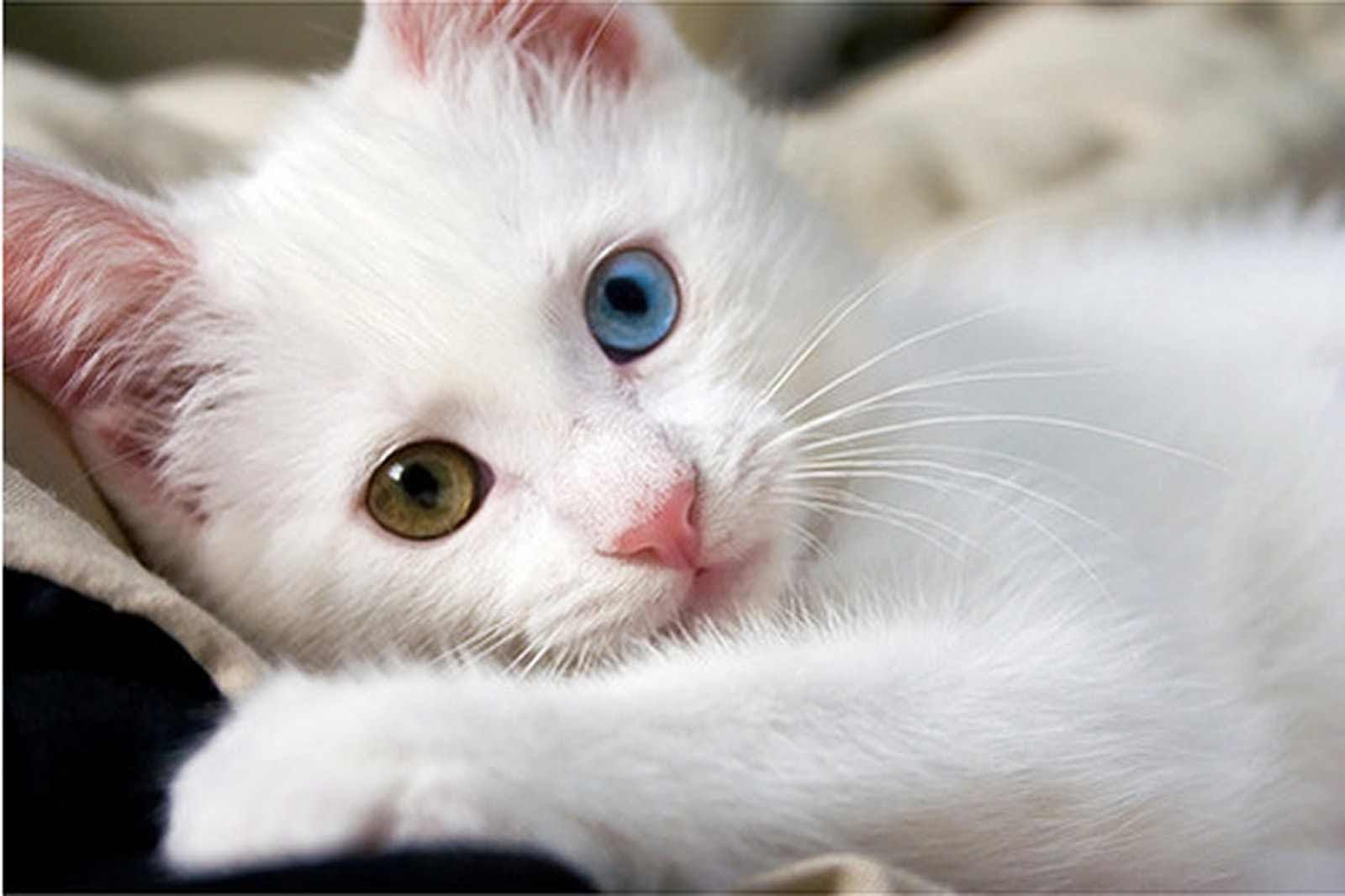 بالصور صور قطط كيوت , اجمل صور قطط 331 2