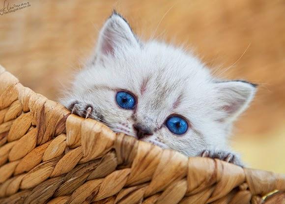 بالصور صور قطط كيوت , اجمل صور قطط 331 3