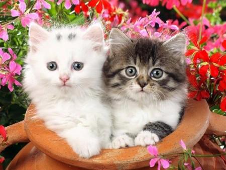 بالصور صور قطط كيوت , اجمل صور قطط 331 4