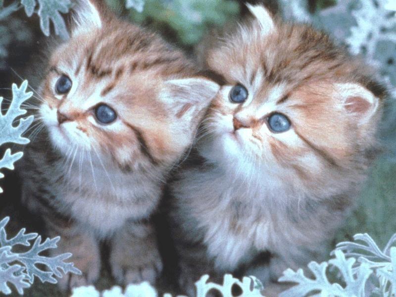 بالصور صور قطط كيوت , اجمل صور قطط 331 6