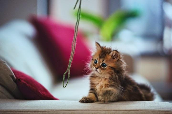 بالصور صور قطط كيوت , اجمل صور قطط 331 7