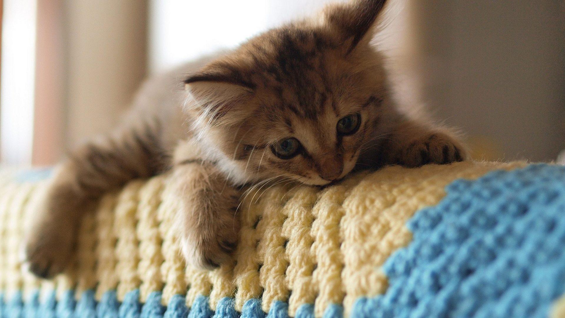 بالصور صور قطط كيوت , اجمل صور قطط 331 8