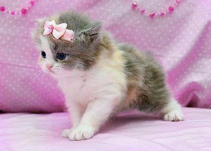 بالصور صور قطط كيوت , اجمل صور قطط 331 9