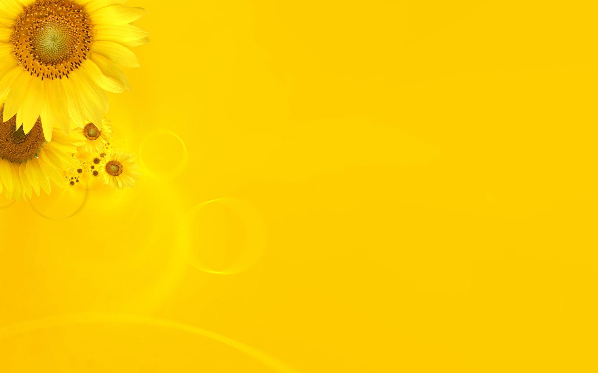 بالصور خلفية صفراء , اجمل الصور و الخلفيات باللون الاصفر 3454 7