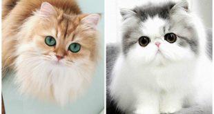 قطط جميلة , اجمل صور وخلفيات القطط
