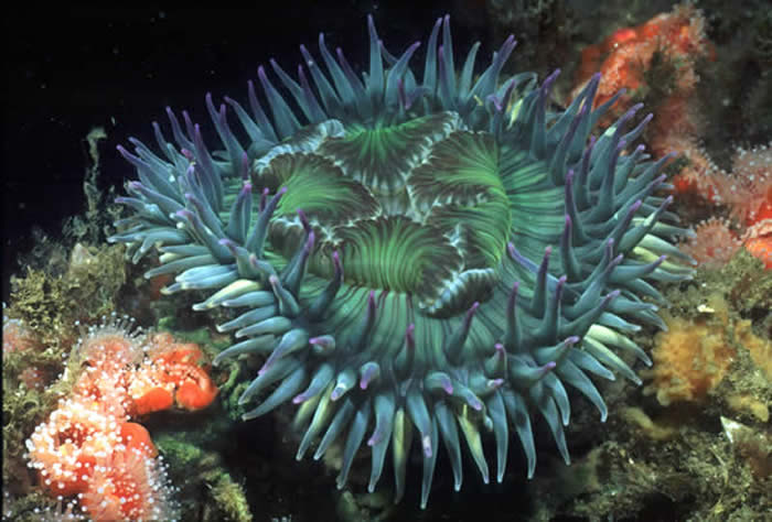 بالصور عجائب البحر , اجمل صور الطبيعة 428 2