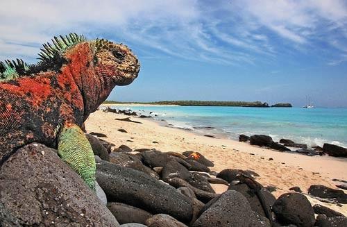 بالصور عجائب البحر , اجمل صور الطبيعة 428 8