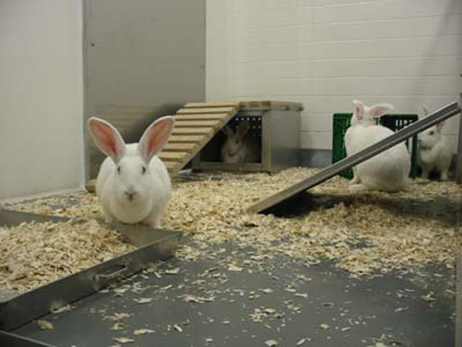 صورة تربية الارانب في المنزل , كيف تربي ارنب في منزلك؟