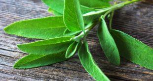 صور عشبة الميرمية , فوائد شرب الميرمية