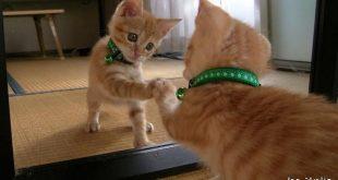 قطط مضحكة , اجمل القطط المضحكة