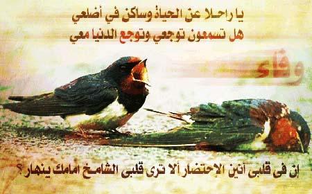 بالصور صور معبرة عن الحب , صور عن الحب 567 12