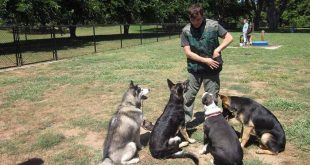 بالصور كيفية تدريب الكلاب , طريقة تدريب الكلاب 731 3 310x165