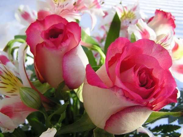 بالصور صور ورود طبيعيه , اشكال الربيع في زهرات البساتين 84 2