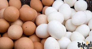 بالصور تفسير رؤية البيض في المنام للمتزوجة , الحلم بالبيض في المنام 92 3 310x165