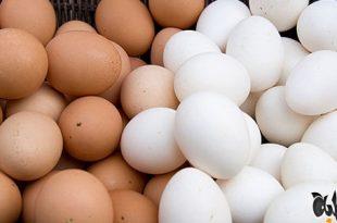 صورة تفسير رؤية البيض في المنام للمتزوجة , الحلم بالبيض في المنام