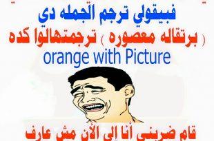 بالصور اجمل الصور المضحكة في العالم , اضحك وانسى همومك 4879 11 310x205