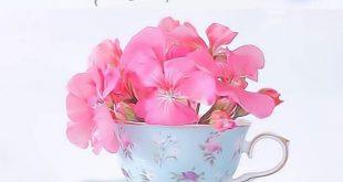 بالصور كلمات عن الصباح قصيره , رسائل صباحية بالصور 4983 19 310x165