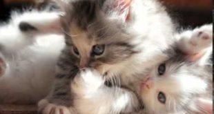 صور صور قطط صغيرة , قطط شكلها جميل