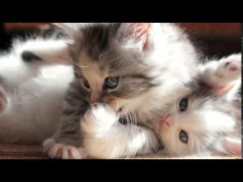صورة صور قطط صغيرة , قطط شكلها جميل