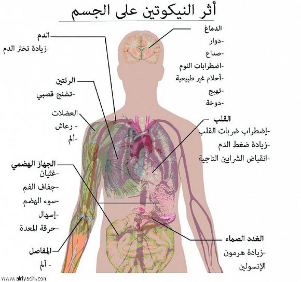 اضرار المعسل مدي خطوره الشيشه علي صحه الفرد بنات كول