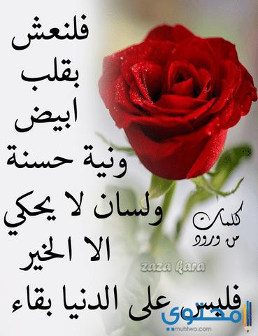 صوره ورود مكتوب عليها عبارات جميله , اجمل انواع الورود