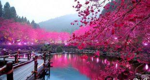 بالصور صور جميله جدا جدا , صور جميله ومميزه 6091 10 310x165
